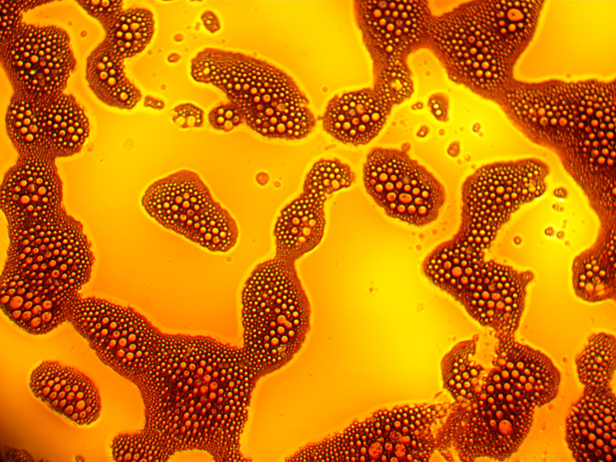 Microscope Image of Oil and Water Emulsion